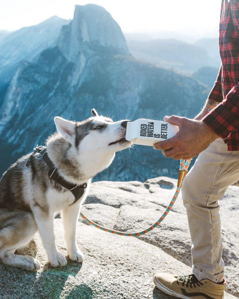Hund dricker vatten