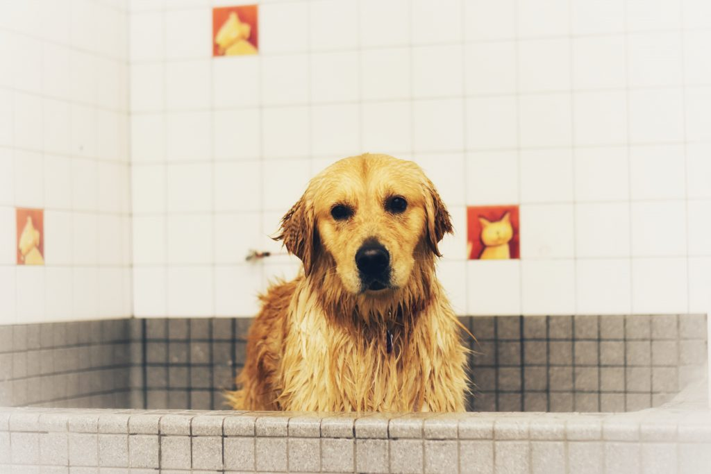 Hur ofta behöver hundar bada?