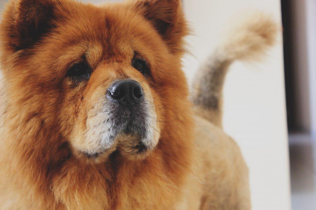 Separationsångest från din hund