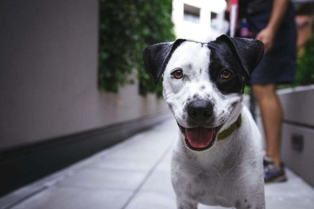 Hälsningsfras eller behov av uppmärksamhet - Hundar