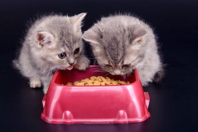 Bästa kattfoder kattunge 2019