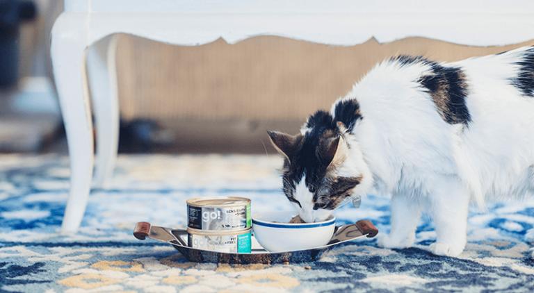 Bästa våtfoder till katter 2019