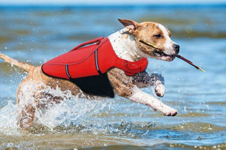 Bästa flytvästar för hundar 2019