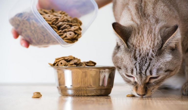 Bästa torrfoder till katter