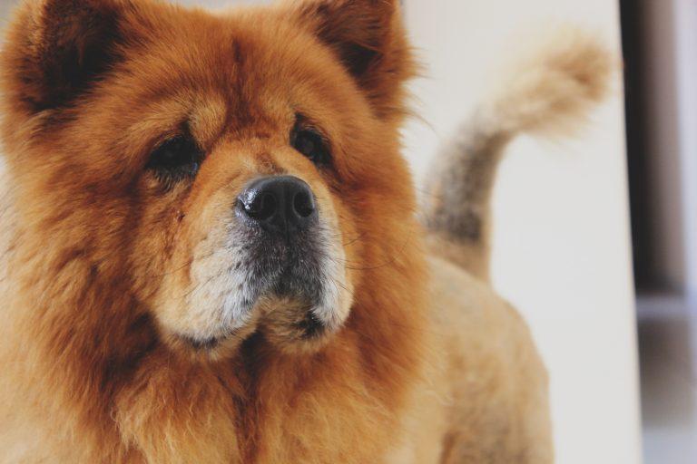 Kan hundar vara pessimister?