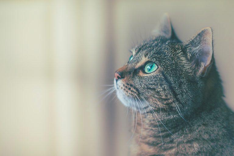 Bästa kattfoder vuxen 2019
