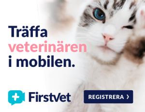 Firstvet - Träffa veterinären i mobilen
