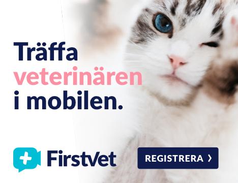 Träffa veterinären i mobilen