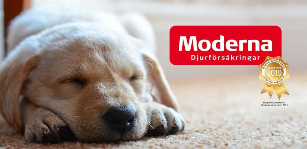 Drömprodukten: Moderna Försäkringar – hundförsäkring; Enkel, Dubbel eller Trippel