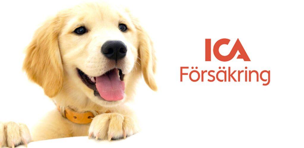 Budgetprodukten: ICA hundförsäkring