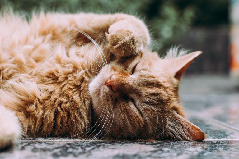Bästa kattförsäkring