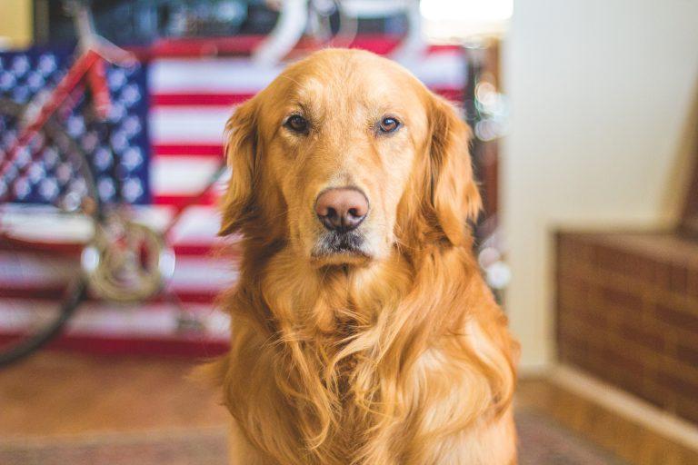 Bästa hundtillbehören