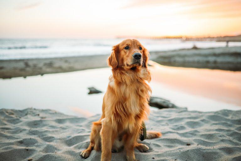 Reflexväst hund Bäst i Test 2021